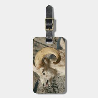 Big Horn Sheep Laughing Bag Tag