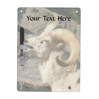 Big Horn Sheep Laughing Dry-Erase Board