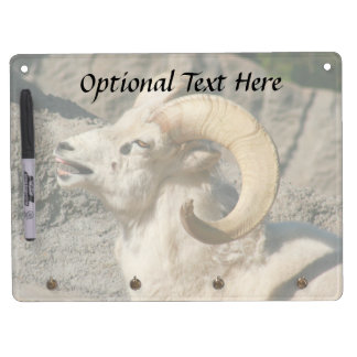 Big Horn Sheep Laughing Dry Erase Board With Keychain Holder