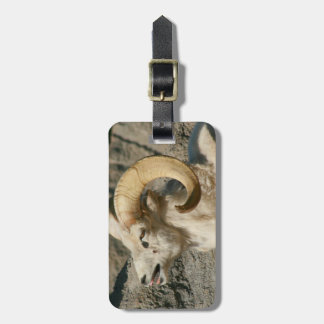 Big Horn Sheep Laughing Tags For Bags