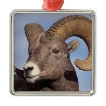 big horn sheep, mountain sheep, Ovis canadensis, Metal Ornament