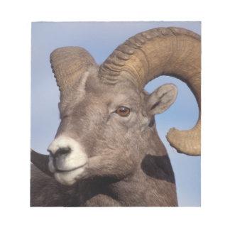 big horn sheep, mountain sheep, Ovis canadensis, Notepad