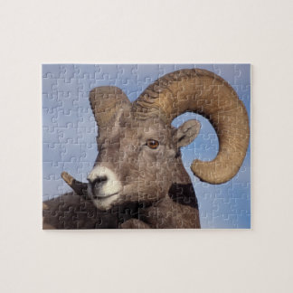 big horn sheep, mountain sheep, Ovis canadensis, Puzzles