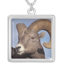 big horn sheep, mountain sheep, Ovis canadensis, Silver Plated Necklace