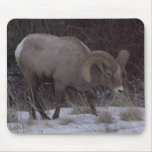 Big Horn Sheep Mouse Pad