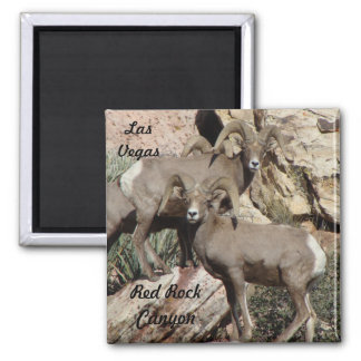 Big Horn Sheep Square Magnet