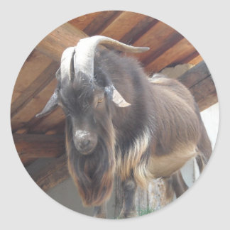 Big Horned Goat Classic Round Sticker