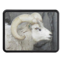 Big Horned Sheep Hitch Cover