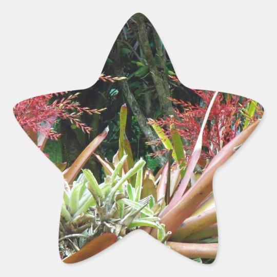 Big Island of Hawaii Botanical Gardens Star Sticke Star Sticker