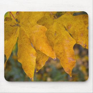 Big Leaf Maple Mousepad