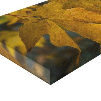 Big Leaf Maple Wrapped Canvas wrappedcanvas