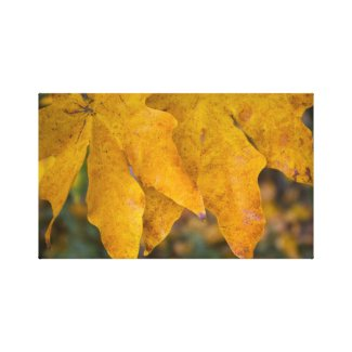 Big Leaf Maple Wrapped Canvas 3 wrappedcanvas