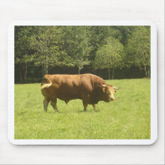 Big Limousin Bull Mouse Pad
