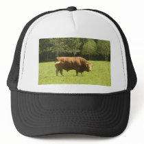 Big Limousin Bull Trucker Hat