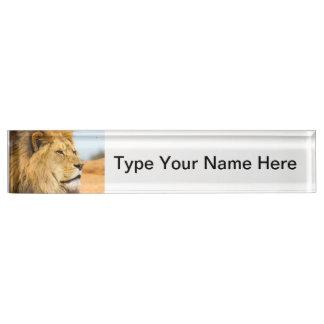 Big lion looking far away desk name plate