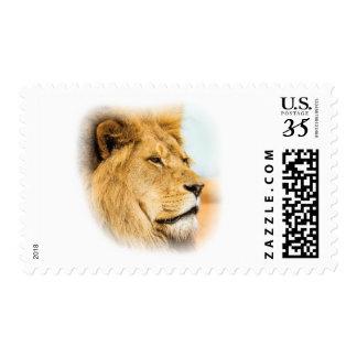 Big lion looking far away postage