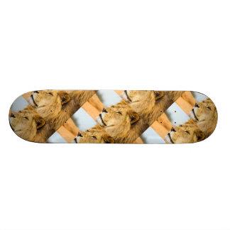 Big lion looking far away skateboard deck