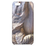 big lizard on log close up cover for iPhone 5C