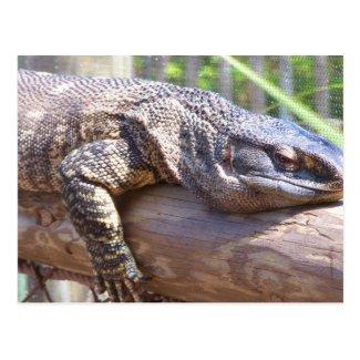 big lizard on log close up post card