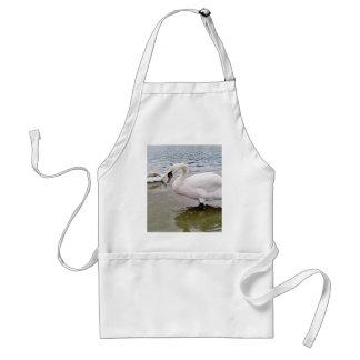 Big Male Swan Bird In Lake Apron
