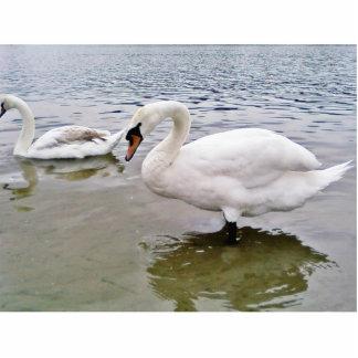 Big Male Swan Bird In Lake Photo Sculpture