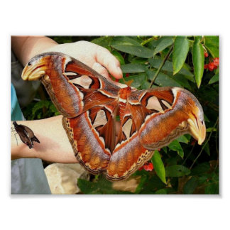 big moth print