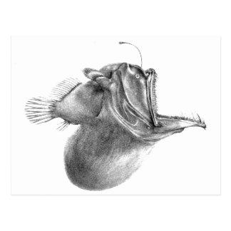 Big mouth gulper angler fish pencil drawing postcard