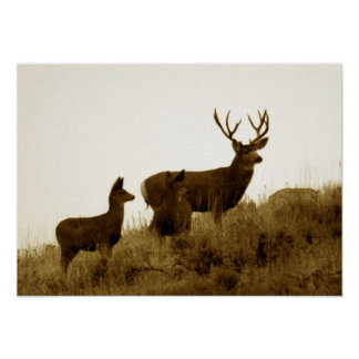 Big mule deer buck poster