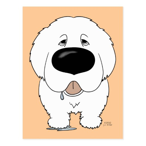 Big Nose Great Pyrenees Post Cards