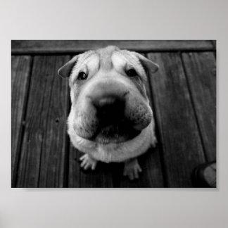 Big Nose Pup Poster
