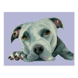 Big Ol' Head - Pit Bull Dog Watercolor Painting Postcard