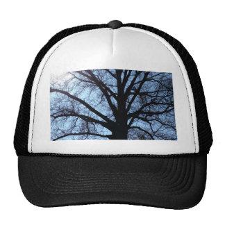 Big Old Aged Tree, Blue Sky, Sunshine Photograph Trucker Hat