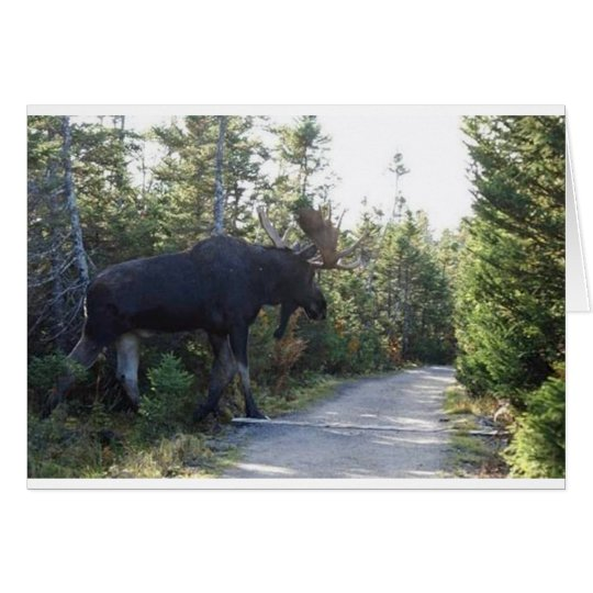 Big Ole Moose! Card