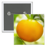 Big Orange Heirloom Tomato Pinback Button