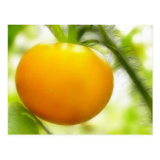 Big Orange Heirloom Tomato Postcard