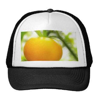 Big Orange Heirloom Tomato Trucker Hat