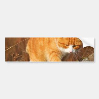 Big Orange Tom Cat on the Prowl Bumper Sticker