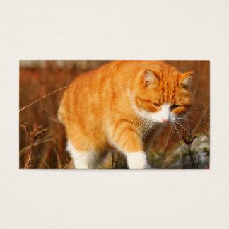 Big Orange Tom Cat on the Prowl Business Card