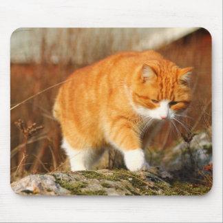 Big Orange Tom Cat on the Prowl Mouse Pad