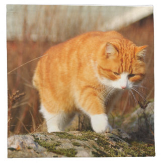 Big Orange Tom Cat on the Prowl Napkin