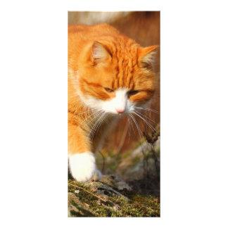 Big Orange Tom Cat on the Prowl Rack Card