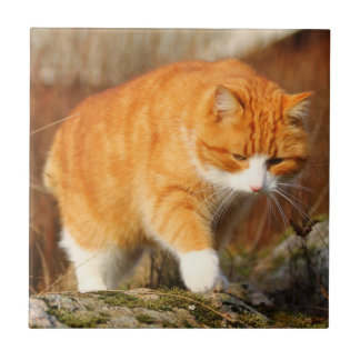 Big Orange Tom Cat on the Prowl Tile