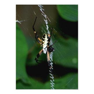 Big Orb Weaver Spider Card