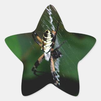 Big Orb Weaver Spider Star Sticker