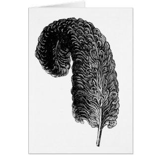 Big Ostrich Feather Card