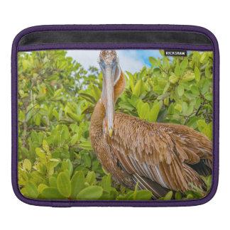 Big Pelican at Tree, Galapagos, Ecuador Sleeve For iPads