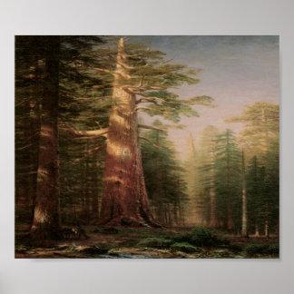 Big Pine Tree Vintage Art Print Poster