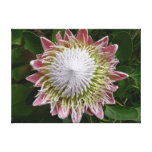 Big Pink and White Flower Nature Floral Canvas Print