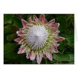 Big Pink and White Flower Nature Floral Card