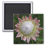 Big Pink and White Flower Nature Floral Magnet